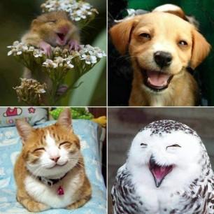 Animais Adoraveis!