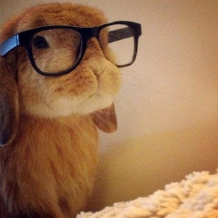 Bunny Hipster