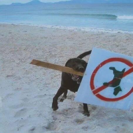 Proibido Cães!