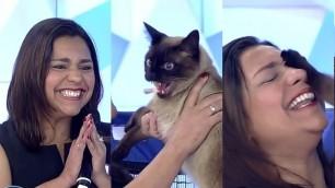 Dona encontra o seu gato perdido