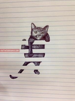 This Cat!