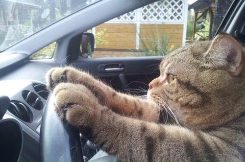 Eu Conduzo!